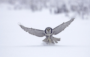 bird, animals, snow, winter, animal