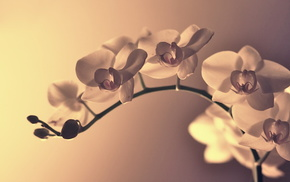 petals, flower, branch, macro, flowers