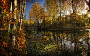 trees, forest, water, autumn, foliage