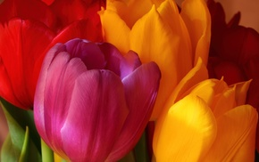 tulips, yellow, pink, bouquet, flowers