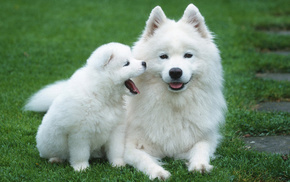puppy, animals, grass