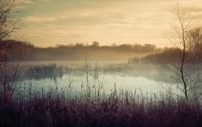 autumn, mist, plants, lake