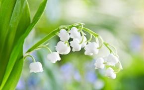flowers, leaf, macro, greenery, tenderness