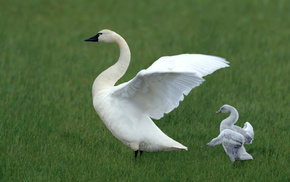 glade, grass, wings, bird, animals