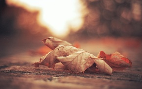 foliage, leaf, bokeh, autumn