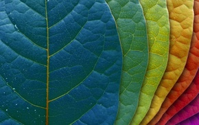 macro, leaves, colors, background