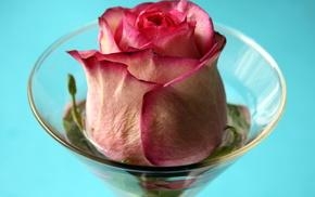 wineglass, flowers, rose