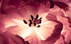 flower, petals, flowers, pink, macro