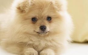 animals, dog, beautiful girl
