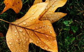 leaf, drops, autumn, macro