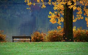 nature, pond, tree, river, autumn