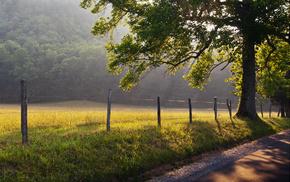 tree, mist, dawn, road, fence