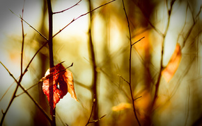 autumn, macro, leaves, motion blur, bokeh