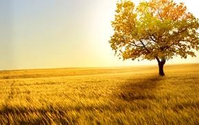 nature, wheat, field, wind