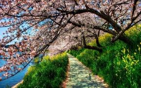 дорога, сад, природа