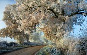 winter, autumn, trees, road