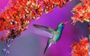 flowers, bird, animals