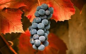 листья, Виноград, вкусно, макро, осень