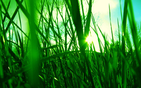 sky, grass, light, Sun, macro