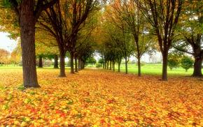 foliage, nature, park, autumn