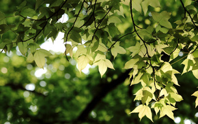 greenery, twigs, leaves, bokeh, macro