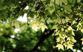 greenery, twigs, leaves, bokeh, macro
