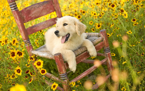 chair, glade, animals, field, flowers