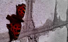 minimalism, butterfly