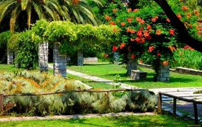 flowers, palm trees, park, nature, bushes
