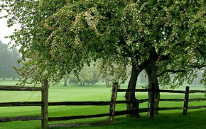 лето, Поле, дерево, забор, природа