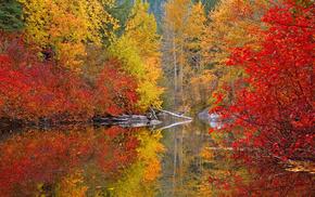 paints, forest, autumn