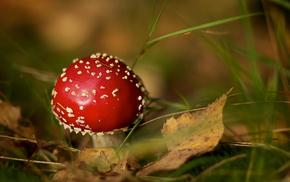 leaves, bokeh, mushroom, macro, autumn
