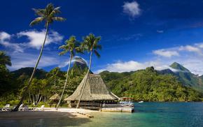 beach, tropics, nature, palm trees