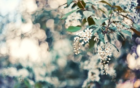nature, bokeh, petals, leaves, flowers