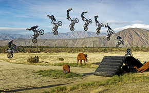 bounce, bike, elephants, sports