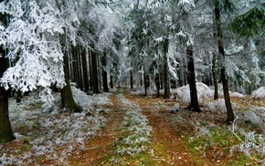 trees, winter, forest