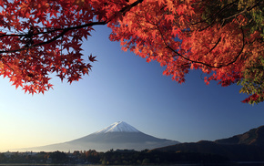 tree, twigs, volcano, autumn, Japan