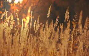 field, landscape, light, gold, autumn