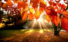 rays, autumn, leaves, trees