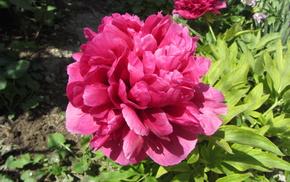 flowers, macro, spring, flower