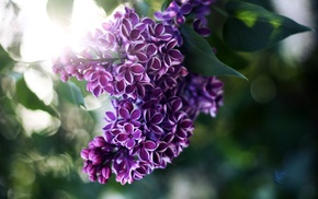 motion blur, flowers, rays, light, leaves