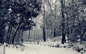 Лес, зима, деревья, снег