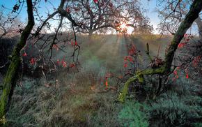 Sun, nature, autumn, twigs