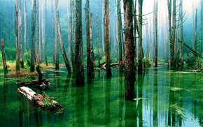 forest, water, nature, trees