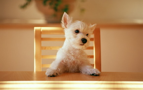 dog, animals, puppy, table, chair