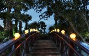 bridge, palm trees, evening, nature