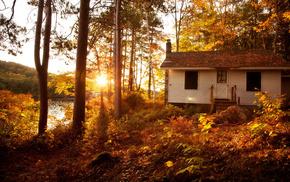 Sun, nature, sunset, forest, trees