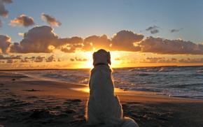 собака, песок, Вечер, море, пляж, природа