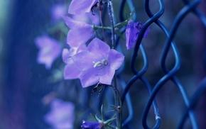 photo, bells, flowers, macro