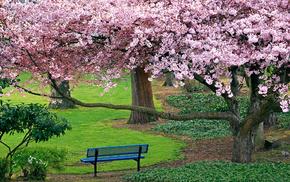 sakura, trees, park, nature
